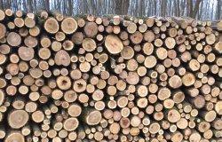 Tájékoztató a szociális tűzifa támogatásról